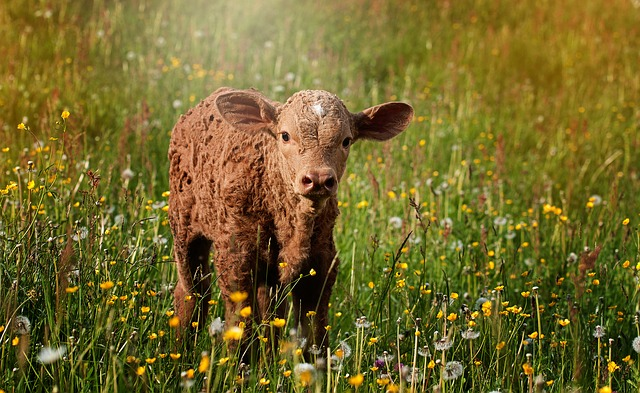 伝統的農法をしている環境の方が、新しい農法をしている環境より気管支喘息が少なくなる: 症例対照研究