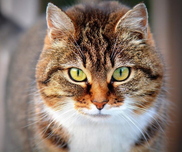 ネコアレルギーは、豚肉アレルギーの原因になるかもしれない(pork-cat症候群): 症例集積研究