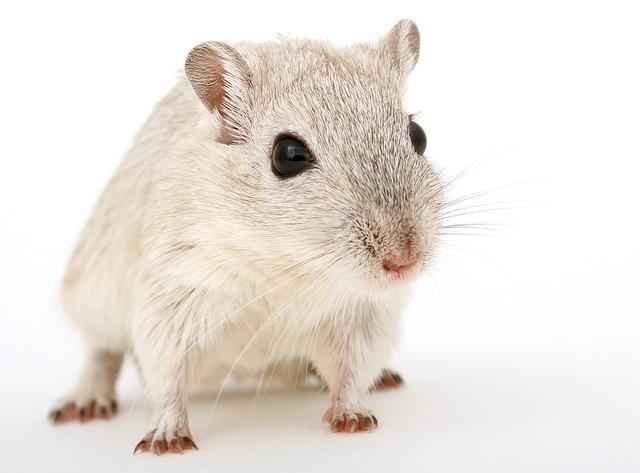 ピーナッツアレルギーは、マウスの気道過敏性を増強させる