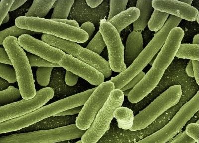 抗生剤は、溶血性尿毒症症候群(HUS)を増やすのか?