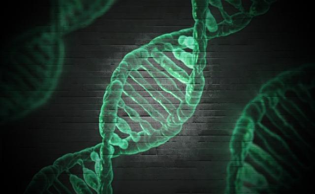 食物アレルギー発症に関連する新しい遺伝子(SPINK5)の初報告