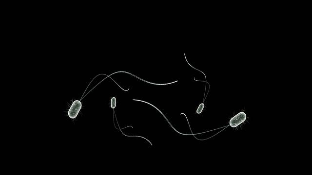 便中細菌の菌株により、アトピー性皮膚炎の発症リスクが変わる?