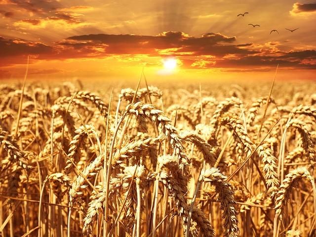小麦早期開始に小麦アレルギーの予防効果はあるか?: システマティックレビュー
