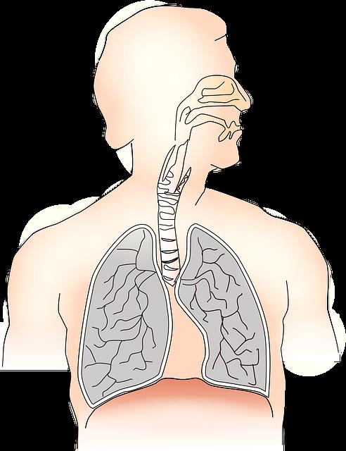 呼気一酸化窒素(FeNO)は、喘息の診断に有用か?:システマティックレビュー