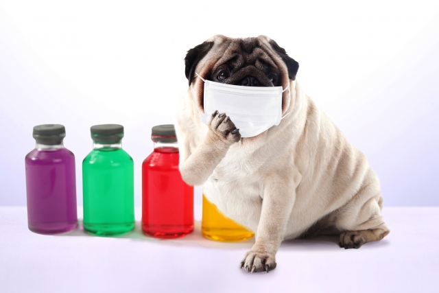花粉に対する舌下免疫療法は、喘息発症を予防するか?:ランダム化比較試験