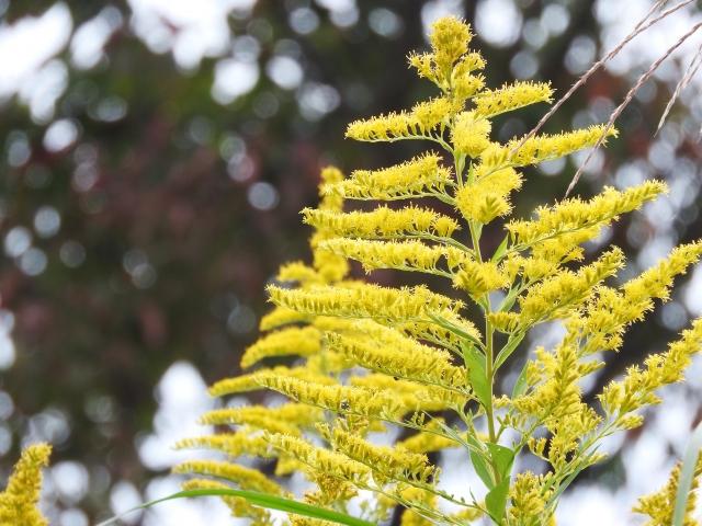 花粉は、小児喘息発作の誘因となるか?