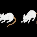 母マウスにゾレアを使用すると仔マウスはアレルギーにならないかもしれない(第1回/全2回)
