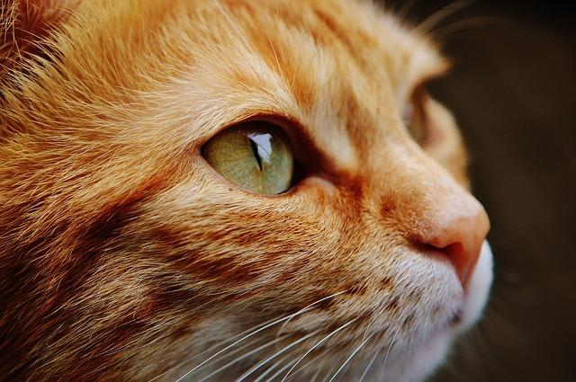 ネコを低アレルゲン化するワクチン?