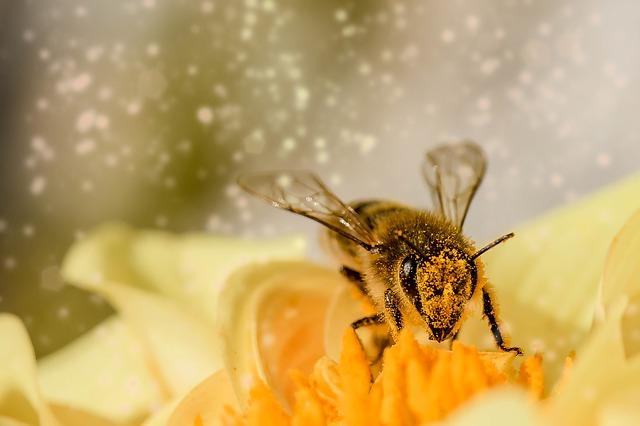 小児期の昆虫毒アナフィラキシーは、どれくらい改善するか?