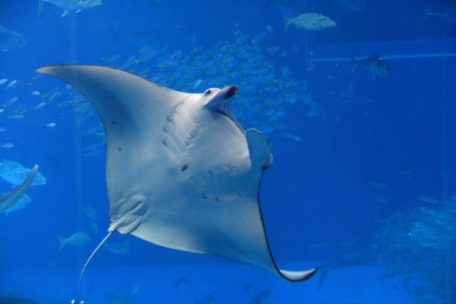 魚アレルギーがあっても、エイやサメは摂取できるかもしれない