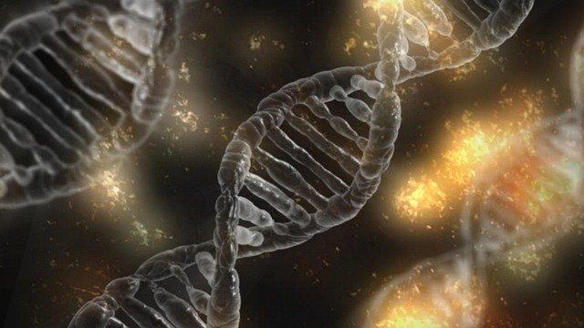 食物アレルギーに対する遺伝的な素因は、どれくらいわかっているか?