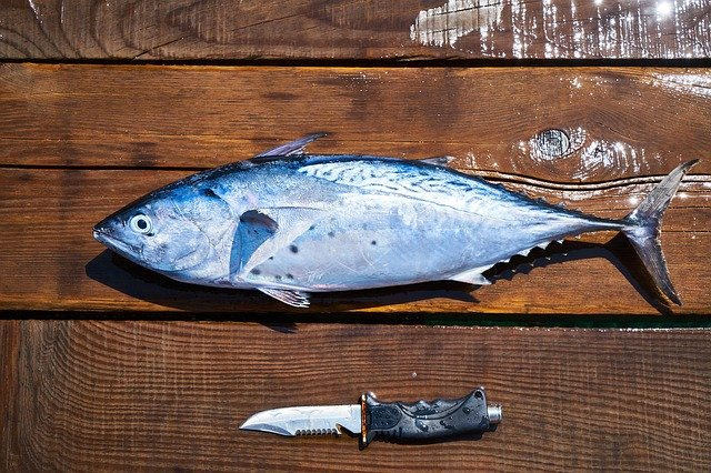 手湿疹のまま魚を扱った仕事を継続すると、魚アレルギーを発症しやすくなる?