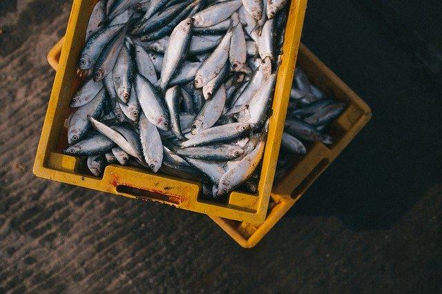 夏になると増える、魚によるヒスタミン中毒(スカムロイド中毒)とは?
