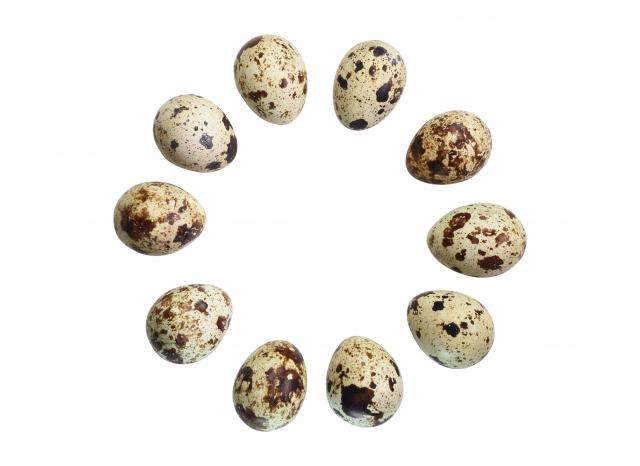 鶏卵アレルギーのある児は、他の家禽(うずら・ハト・ガチョウ・七面鳥など)の卵にどれくらい感作されているか?