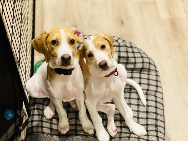 イヌやネコアレルゲンが、喘息発作を起こす濃度で存在する頻度は、どれくらいか?