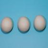 卵アレルギーの自然歴: コホート研究