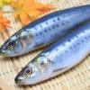 妊娠中からの魚油摂取は、こどもの神経発達を良くするかもしれない