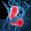 ジスロマックによるRSウイルス感染後の喘鳴予防はモラキセラ菌の減少が関与しているか