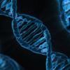 フィラグリン遺伝子変異はアトピー性皮膚炎以外の皮膚疾患にも関連するかもしれない