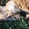 7-8歳時点での動物感作と気管支喘息重症度は19歳時点での気管支喘息の持続リスクとな